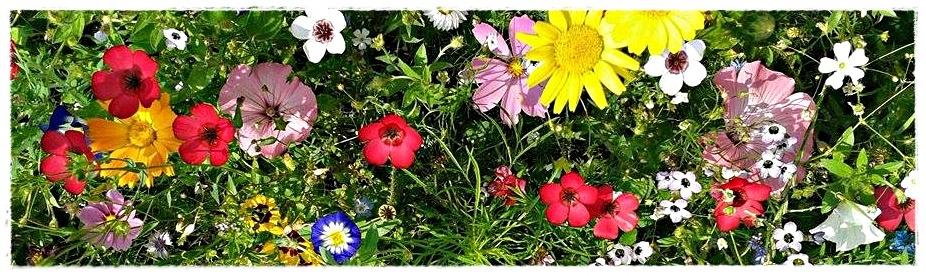 Blumen 6